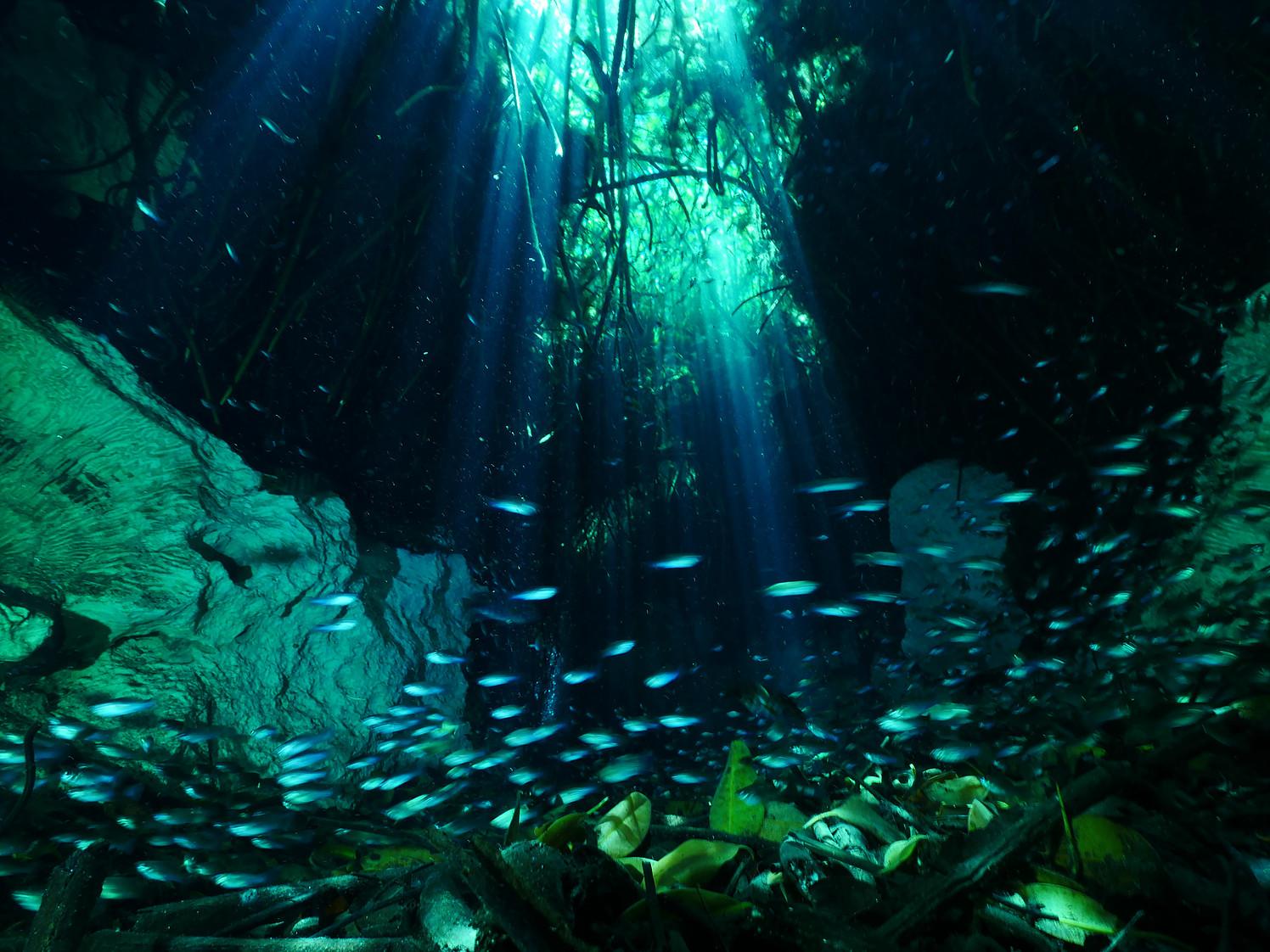 Los Cenotes de la Riviera maya, un misterio lleno de historia y magia ...