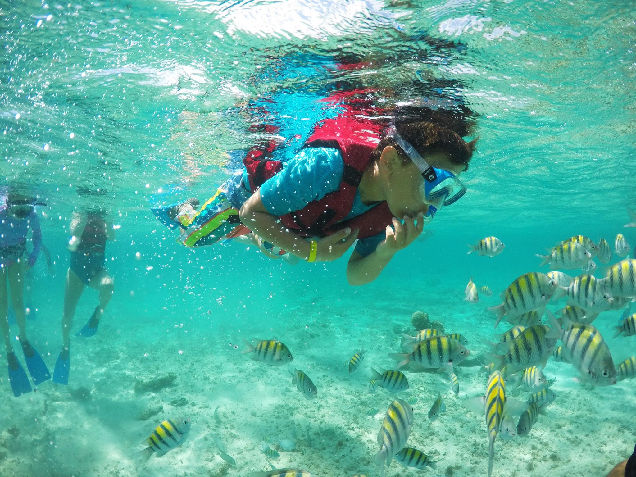 Immerse yourself to life in the coral reef: Snorkel