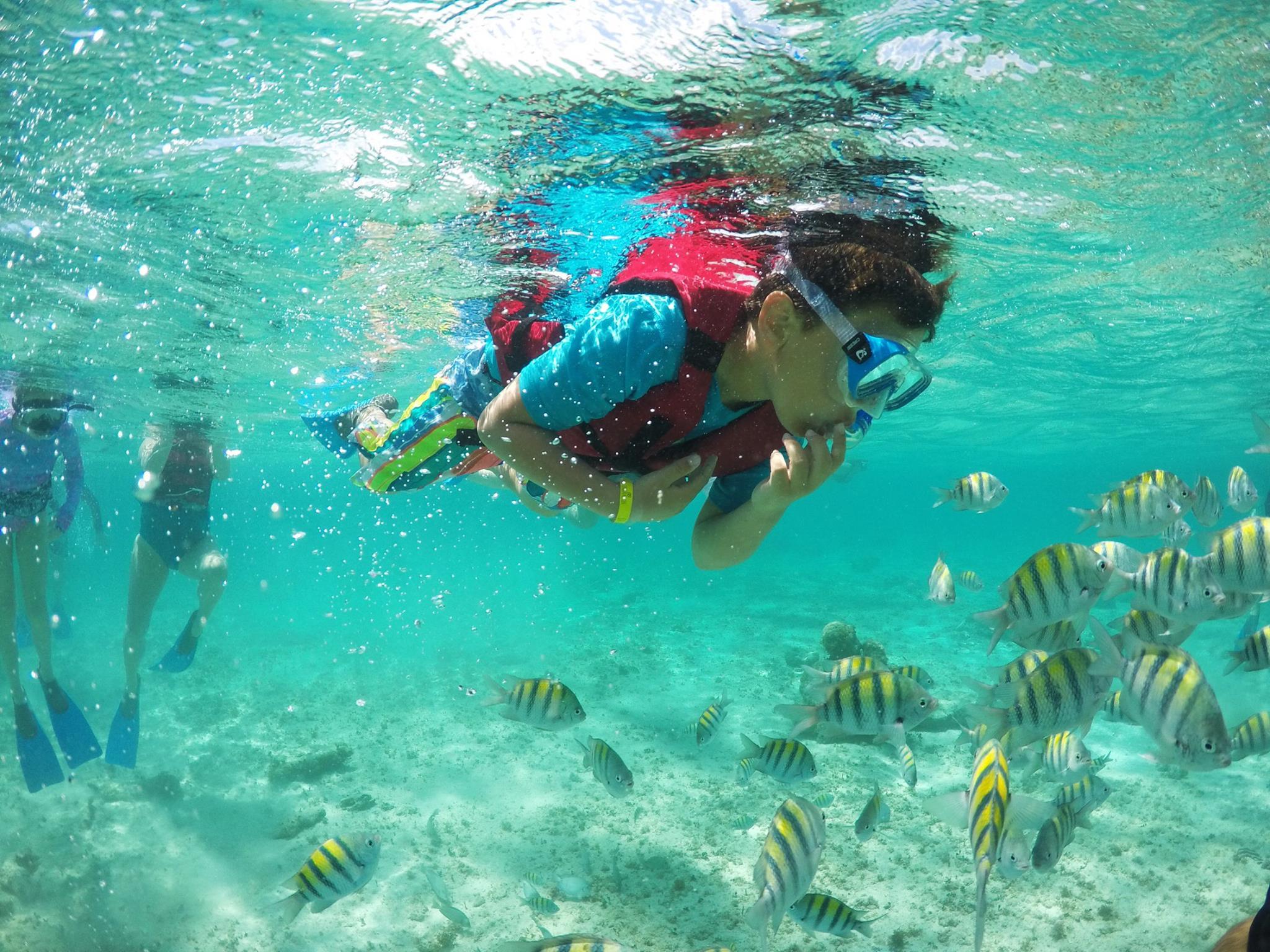 Sumergete a la vida en el arrecife de coral: Snorkel