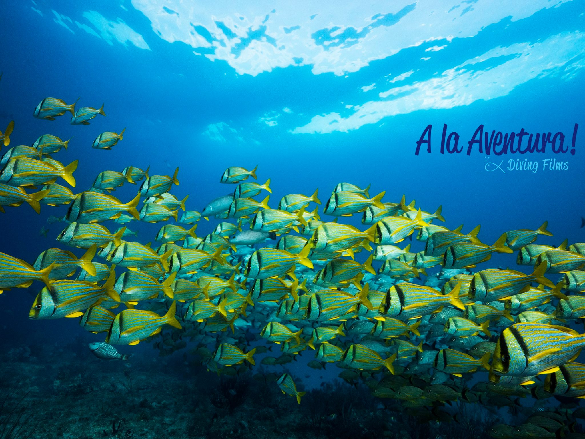 THE SEA - PABLO NERUDA