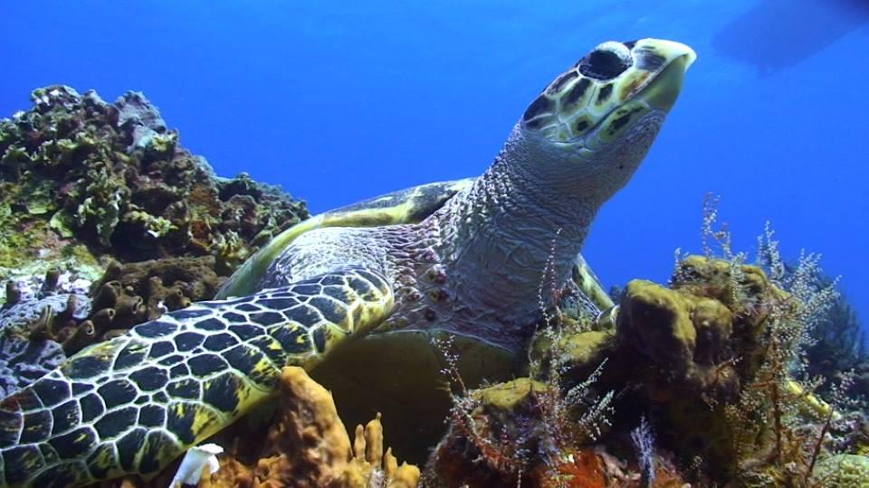 Te apasiona la vida abajo del mar ?