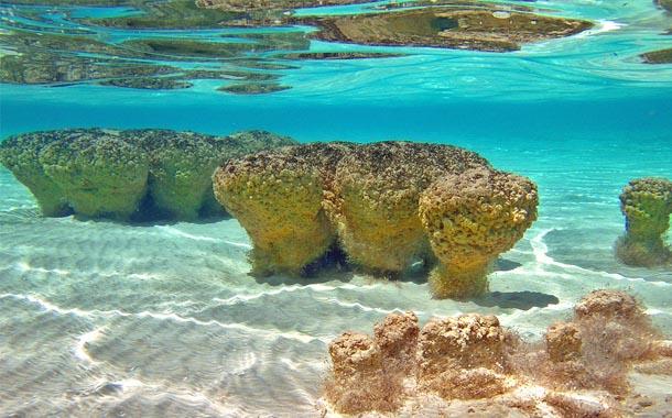 Los Estromatolitos....