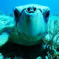 Las tortugas marinas nos necesitan!
